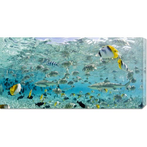Global Gallery Blacktip Sharks and Tropical Fish in Bora-Bora Lagoon by Michele Westmorland: 36 x 18 Canvas Giclees, Wall Art