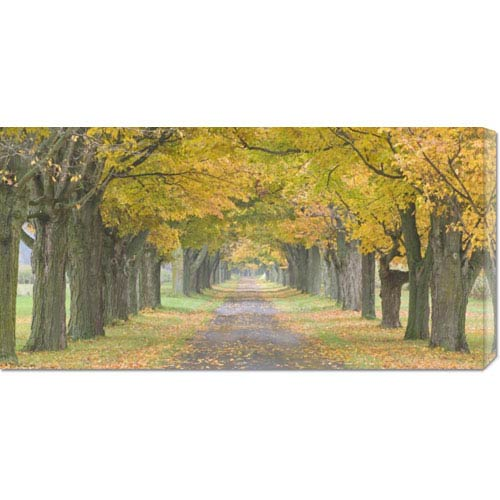 Global Gallery Country Road Lined by Trees in Autumn by Owaki-Kulla: 36 x 18 Canvas Giclees, Wall Art