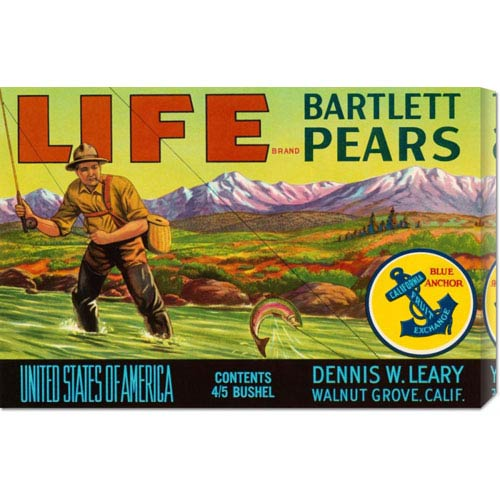 Global Gallery Life Brand Bartlett Pears: 14.7 x 22 Canvas Giclees, Wall Art
