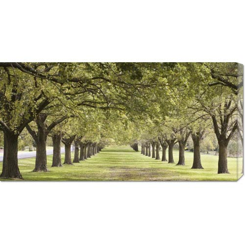 Global Gallery Rows of Trees Bordering Greensward: 36 x 18 Canvas Giclees, Wall Art