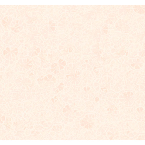 By The Sea Sand Dollar Texture Wallpaper: Sample Swatch Only