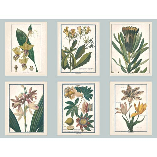 York Wallcoverings Ashford Toiles Botany Removable Wallpaper- Sample Swatch Only