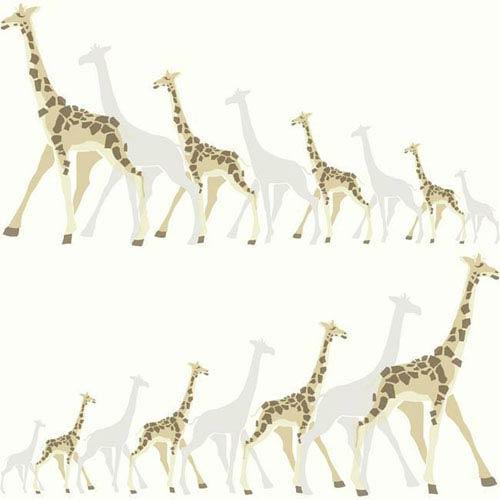 Dwell Studio Baby and Kids Giraffes Brown and Black Wallpaper