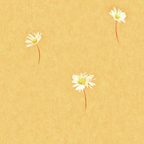 Selby Orange Single Daisy Toss Wallpaper