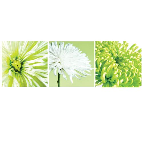 Lime Chrysanthemums Canvas, Set of 3