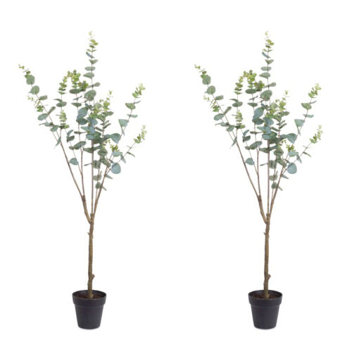 Brown and Green 14-Inch Potted Eucalyptus Succulents, Set of 2