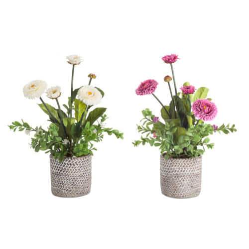 Purple and White Eight-Inch Potted Mum, Set of 2