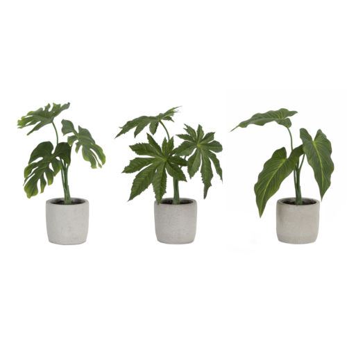 Green and Brown Potted Foliage, Set of 6