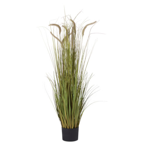 Green and Brown Potted Grass and Dogtail, Set of 2