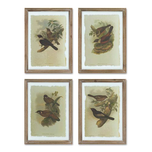 Framed Birds Print, Set of Four