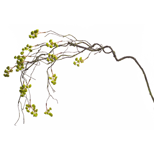 Green and Brown Twig and Moss Branch, Set of 12