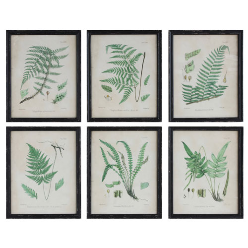 3R Studio Fern Print Wood Framed Wall Plaque, Set of Six