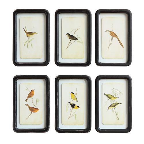 Framed Birds Wall Art, Set of Six