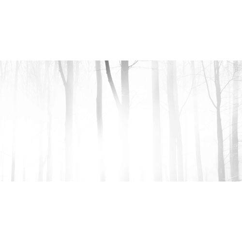 Foggy Forest 60 x 30 In. Painting Print on Wrapped Canvas