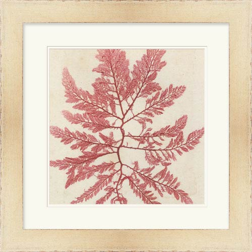 Surya Brilliant Seaweed I by Vision Studio 24 x 24-Inch Animal and Nature Wall Art