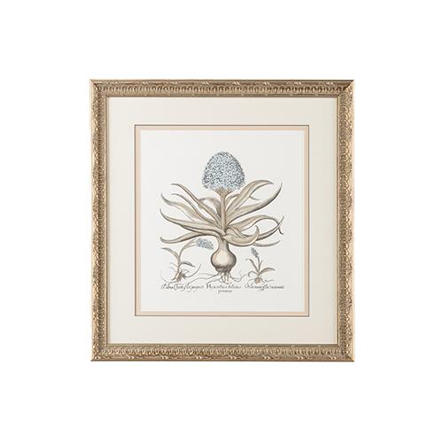Silver Besler Botanical in Blue II Print