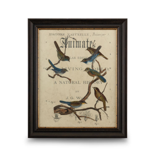 Distressed Brown with Gold Vintage Ornithology II Wall Art