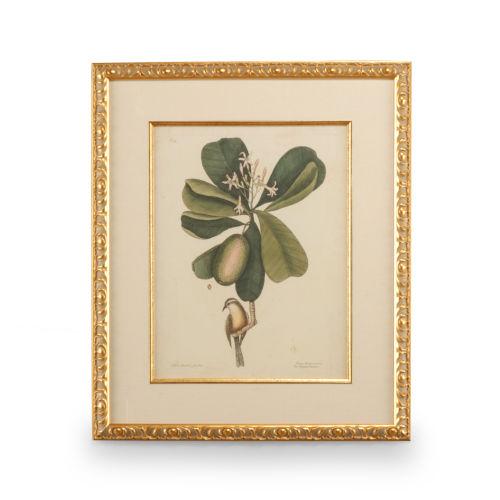Gold Catesby Bird and Botanical III Wall Art