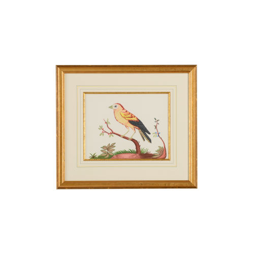 Yellow Wing Bird Red Berry Wall Art
