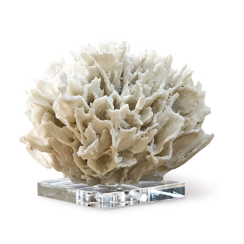 East End White Ribbon Coral