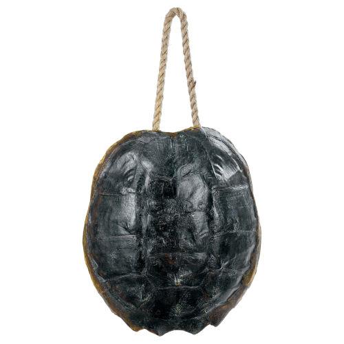 Turtle Ebony Decorative Object