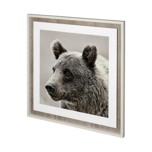 Gray Bear Focus - Hush Wall Art