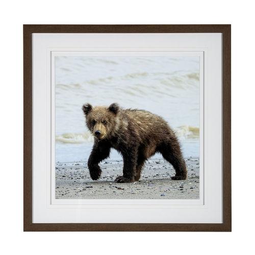 Brown Curious Cub Wall Art