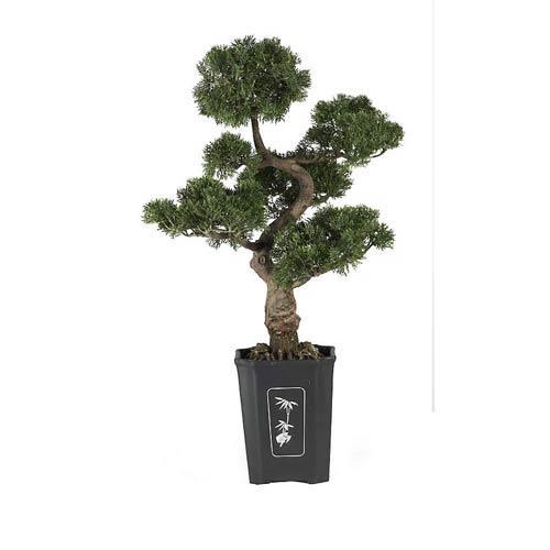 36-Inch Cedar Bonsai