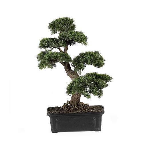 24-Inch Cedar Bonsai