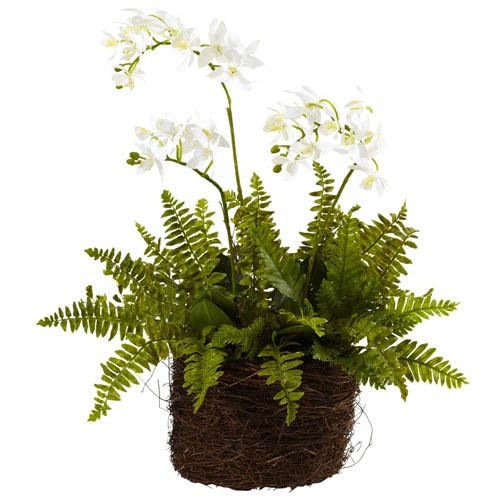 Nearly Natural Green Mini Phalaenopsis and Fern with Bridsnest Planter