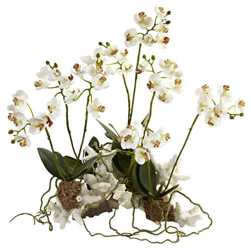 White Mini Phalaenopsis Set on Coral