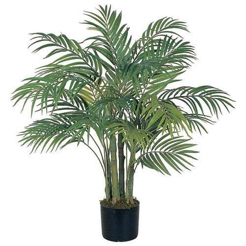 Areca Silk Palm Tree - 3 Feet