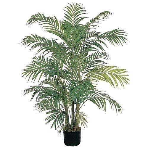 Areca Silk Palm Tree - 4 Feet