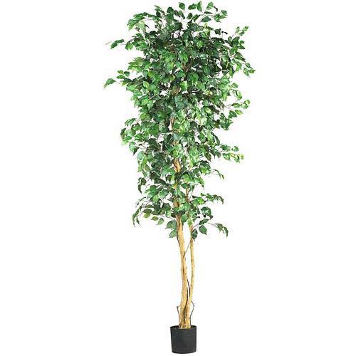 7-Foot Ficus Silk Tree