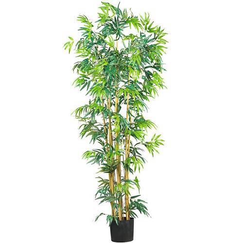 6-Foot Multi Bambusa Bamboo Silk Tree