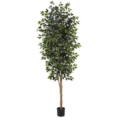 Green 8 Foot Ficus Tree