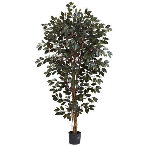 Green 6 Foot Capensia Ficus Tree