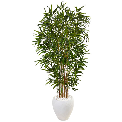 5 Ft. Bamboo Tree in Oval White Planter