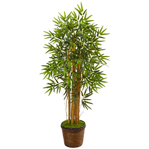 4.5 Ft. Bamboo Tree in Coiled Rope Planter
