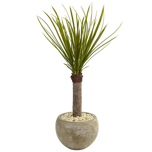 3.5 Ft. Yucca Tree in Sand Colored Bowl
