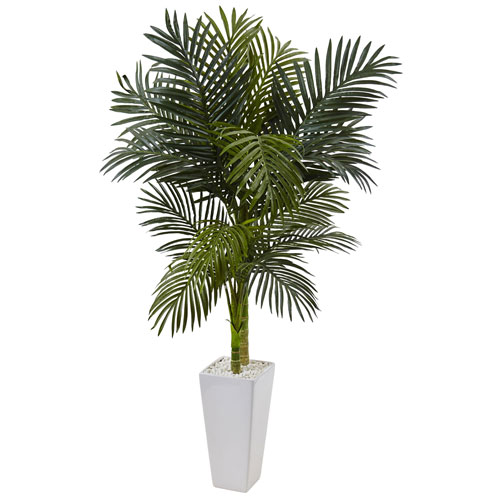 5 Ft. Golden Cane Palm Tree in White Tower Planter