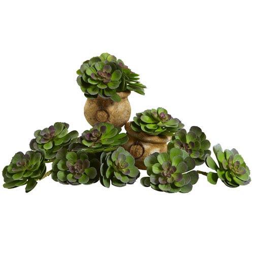 Green and Burgundy 6-Inch Echeveria Succulent, Set of 12