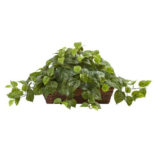 Green Pothos with Ledge Basket