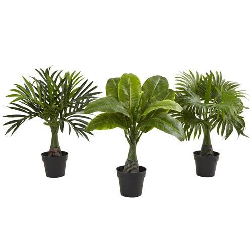 Green Areca, Fountain and Banana Palm, Set of Three