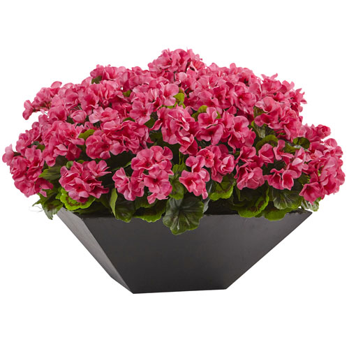 Geranium with Black Planter UV Resistant