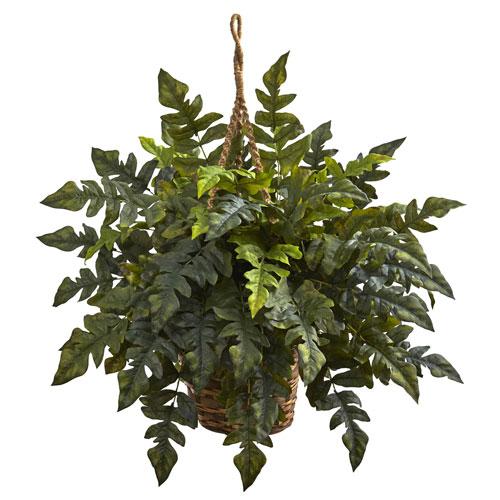 Holly fern Hanging Basket
