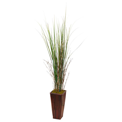 Bamboo Grass in Bamboo Planter