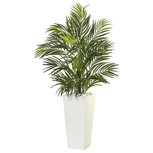 Areca Palm in White Square Planter