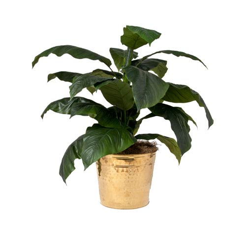 Creative Branch Faux Giant Spathiphyllum in Brass Planter