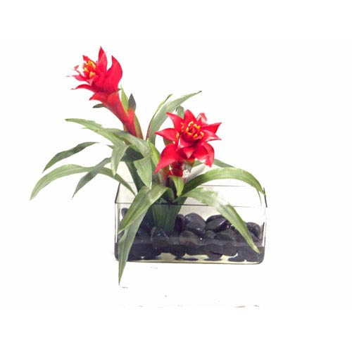 Faux Bromeliads in Acrylic Water